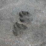 犬連れ御宿海岸|子犬の初めての海体験
