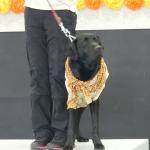 盲導犬PR犬アッサムの卒業式に行ってきました