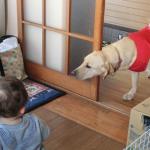 赤ちゃんがやってきた 賢い犬はどう対応する?