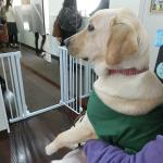 日本ドッグトレーナー協会のイベントに参加しました