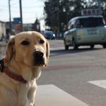 犬と散歩 スマホを見ながらではもったいないよ