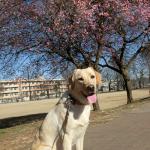 梅の花咲く散歩道