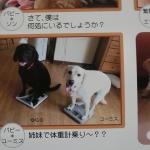 犬の温もりが人の心も優しくしてくれる