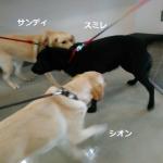 盲導犬ユーザーさんのお話を聞いてきました