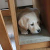 隙間に入る子犬