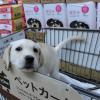 カートに乗る子犬