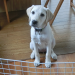 愛犬の名前を呼ぶときに注意したいこと