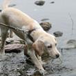 ゆっくり川辺を歩く子犬