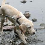 川遊び初体験 慎重な子犬が泳ぐまでの心の動きを観察してみた