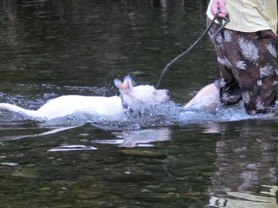 川の中で頭を振るう子犬