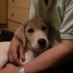 意外と簡単 自分でできる犬の耳のケア