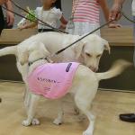 2017「夏!体験ボランティア 盲導犬の一生」に参加しました