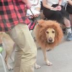 盲導犬ユーザーの講演と子犬が1歳になるまでにしつけておきたい10のこと
