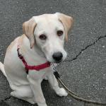 犬の散歩らしくなってきた 生後4か月のある日の散歩
