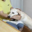 甘噛みする犬