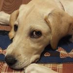 犬のしつけに「言い聞かせ」は有効か?