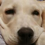犬がため息をつくのはリラックスの証拠?抱っこや寝る前なら心配無し!