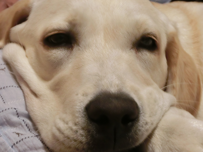 意味 犬 ため息