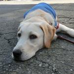 警戒心が強い犬の警戒を解く方法
