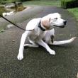 後ろ足で体を掻く子犬
