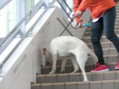 拾い食いする犬をおもちゃで気を引く訓練士