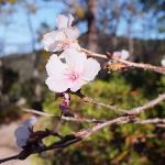 犬連れ桜山公園散策 冬に咲く桜と紅葉を楽しむ