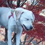 犬がくしゃみを連発する原因と対策!可愛いものから病気が原因のものまで