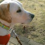 犬の散歩の時間と回数 どのくらいがいいの?