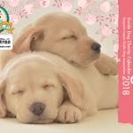盲導犬チャリティカレンダー「Message」2018