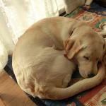 犬と暮らす小さな幸せ