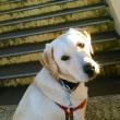 歩道橋の前に座る犬
