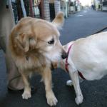 散歩中に他犬を伏せ状態で待つ犬の気持ち