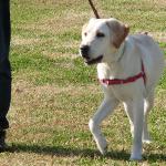 散歩で落ち着かない犬の気持ちを考える 引っ張りを改善するには