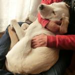 子犬 もうすぐ生後10か月 少し落ち着きがでてきたかな?
