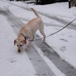 犬はやっぱり雪が好き?雪遊びのトラブルに注意