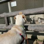 逗子の隠れた?名所 犬連れ披露山公園散策
