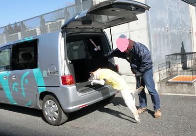 車に飛び乗る子犬