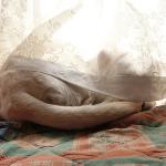 お姫様ベッド?で日向ぼっこする犬