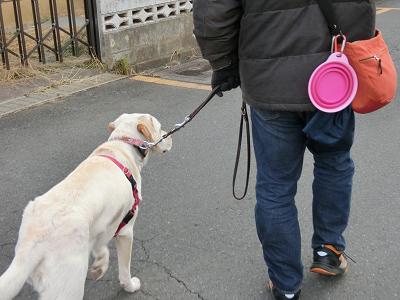 散歩中に歩みが遅くなる犬
