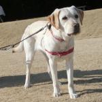 音に敏感な犬への対処法