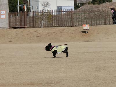お散歩中の小型犬