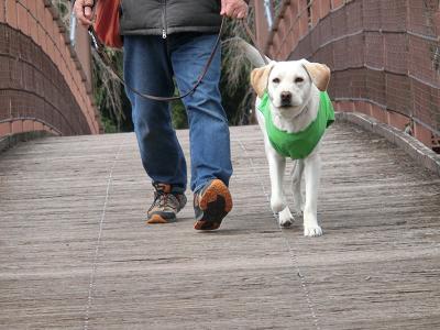 橋を渡る子犬