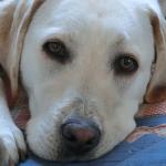 犬の心を満たすお散歩を心掛けたい