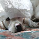 犬の後追い 生活に支障が無い程度ならいいよね?
