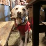 盲導犬ユーザーとボランティアの方に送別会を開いていただきました