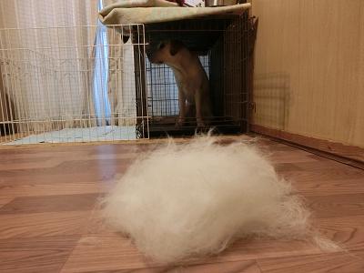 犬の抜け毛アンダーコート