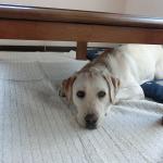 犬と小さな子ども 仲良くできるかな?