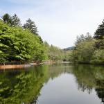 犬連れ軽井沢 新緑の雲場池と旧軽井沢銀座