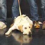 盲導犬ユーザーが感じた委託修了式