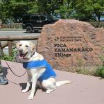 山中湖周辺観光その2 犬連れPICA山中湖ヴィレッジ